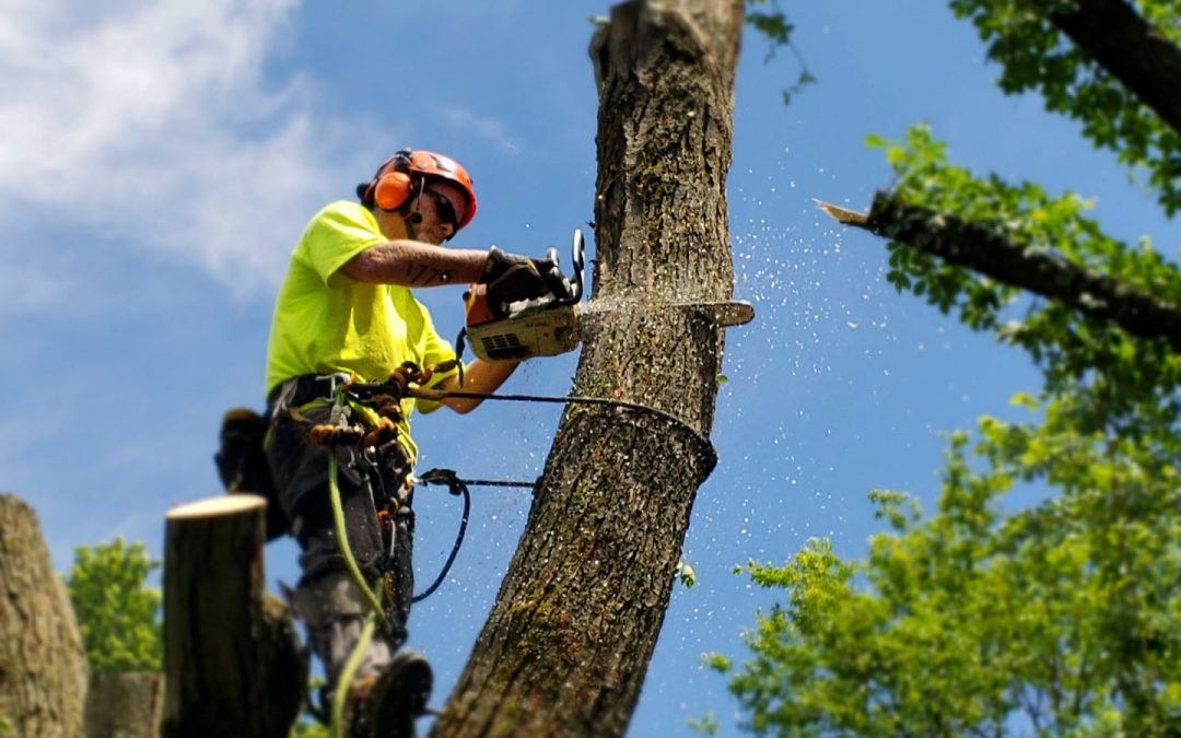 Tree Removal Chilliwack BC